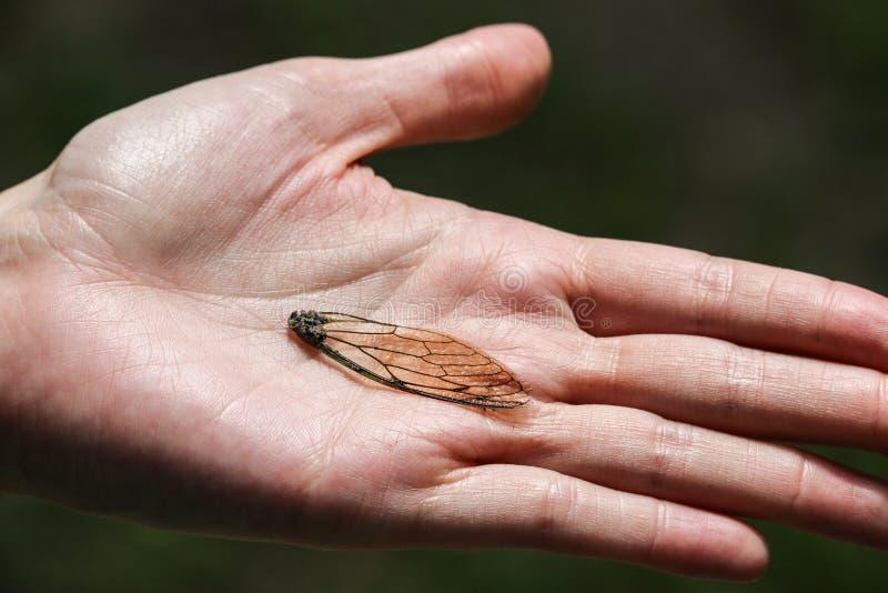 Gebroken Insectvleugel in een Hand stock afbeelding
