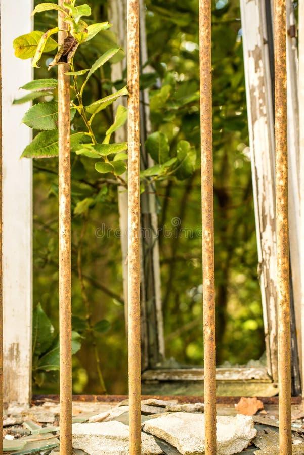 Gebroken oud venster met net en mening aan groen stock afbeelding