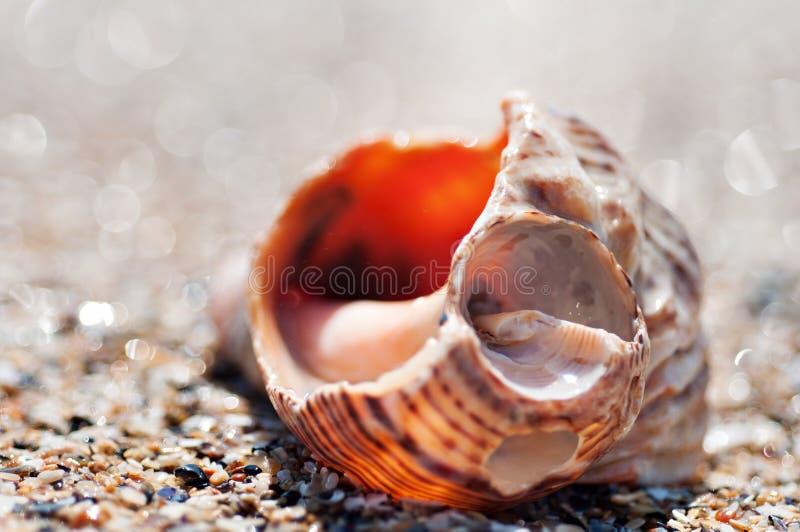 Gebroken Overzees Shell royalty-vrije stock foto