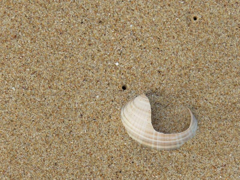Gebroken overzeese shell in het zand royalty-vrije stock foto's