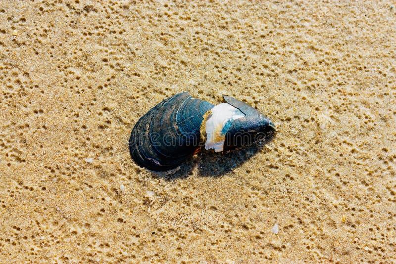 Gebroken shell op zand royalty-vrije stock afbeeldingen
