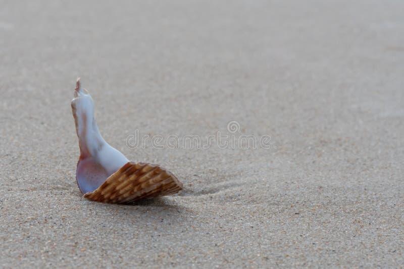 Gebroken Shell Sits op Nat Zand stock foto's
