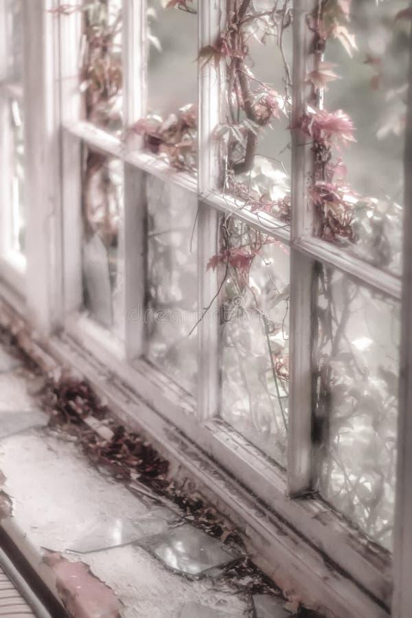 Gebroken venster met roze bloem in zachte nadruk stock afbeeldingen