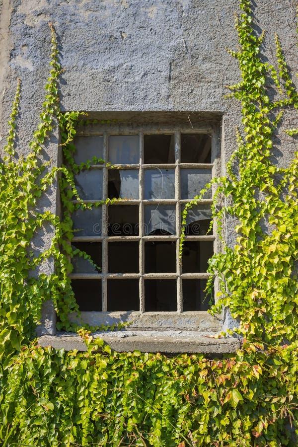 Gebroken venster met wijnstokken stock afbeeldingen