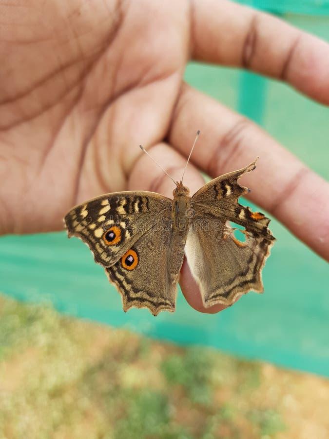 Gebroken vleugel stock fotografie
