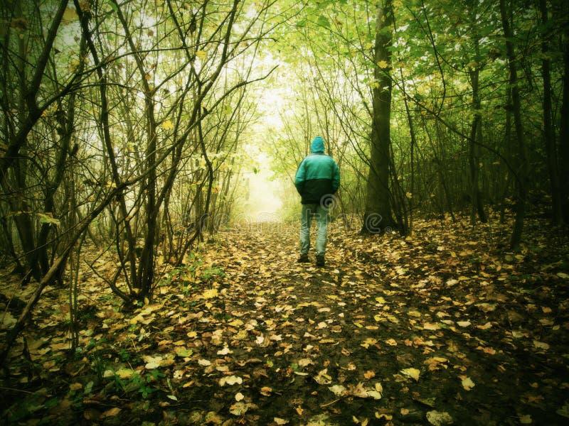 Gebuckelter Mann geht in bunten Wald im Herbstnebel lizenzfreie stockbilder