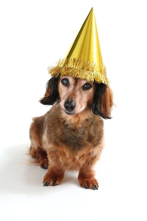 Geburtstaghund stockfotos