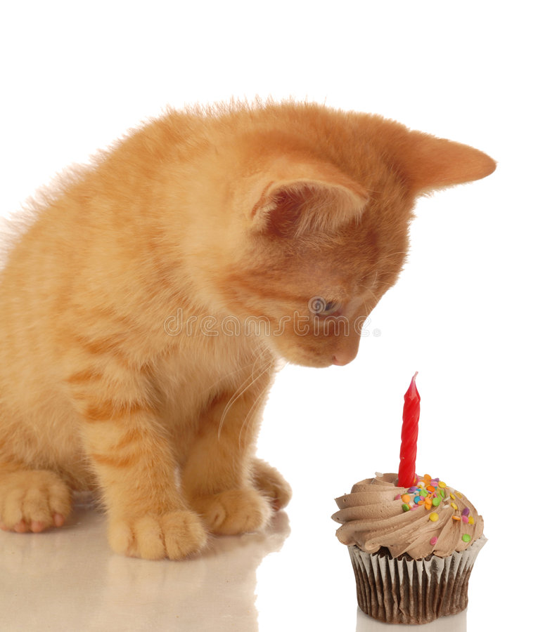 Geburtstagkätzchen mit kleinem Kuchen stockfotografie