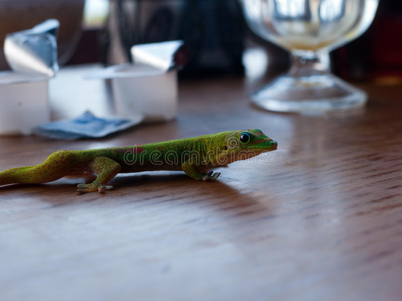 Gecko à notre table de petit déjeuner photographie stock