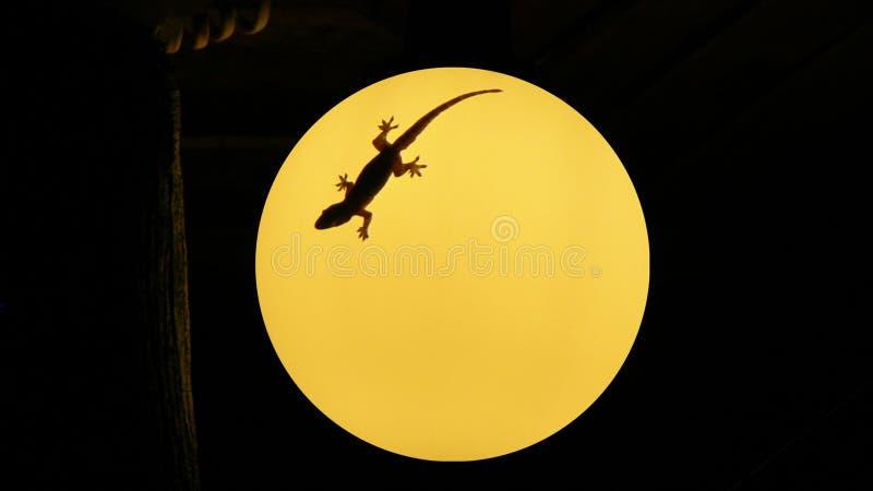 Gecko σε έναν λαμπτήρα στοκ εικόνες