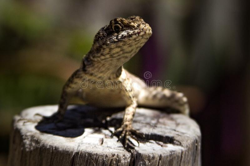gecko imagem de stock royalty free