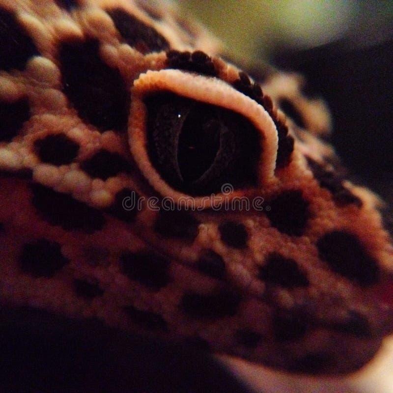 gecko fotografie stock