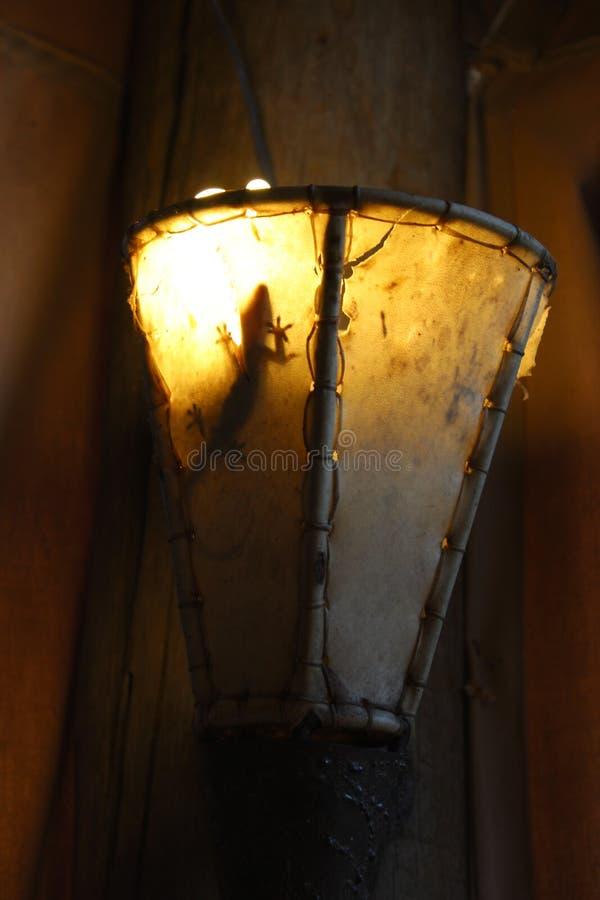 gecko fotografie stock libere da diritti