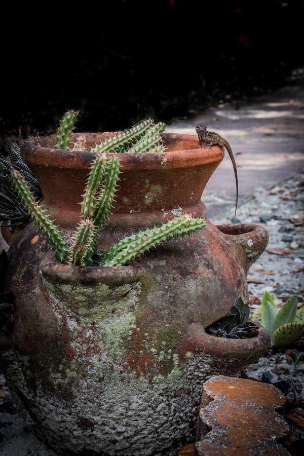 Gecko auf einem Tongefäß mit Kaktus lizenzfreies stockfoto