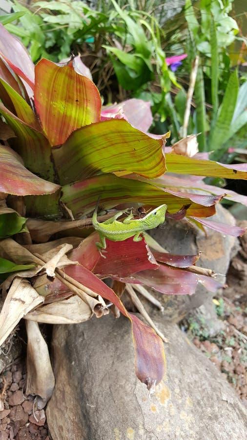 Gecko auf tropischer Anlage stockbilder