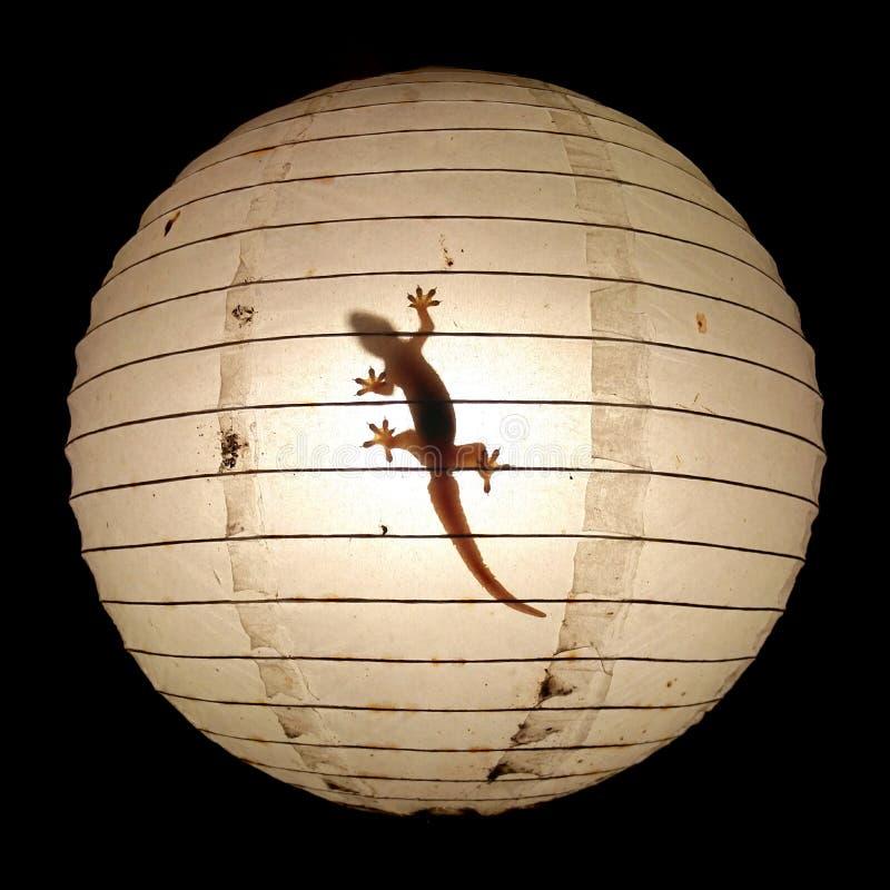Gecko dans la lumière photo libre de droits
