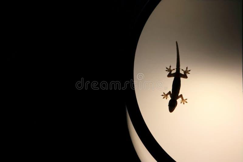 Gecko de maison de silhouette sur la lampe légère photographie stock libre de droits