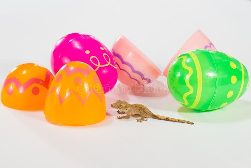 Gecko de Pâques photographie stock