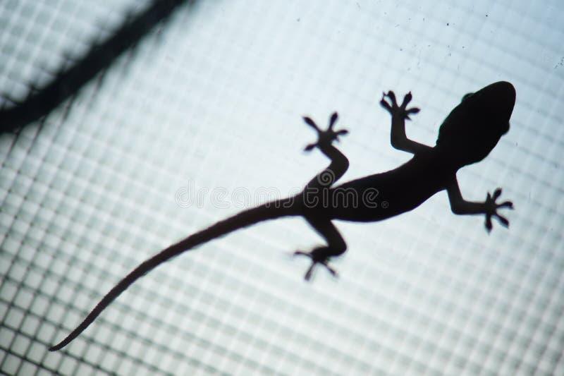 Gecko, der auf Masche kriecht lizenzfreies stockfoto