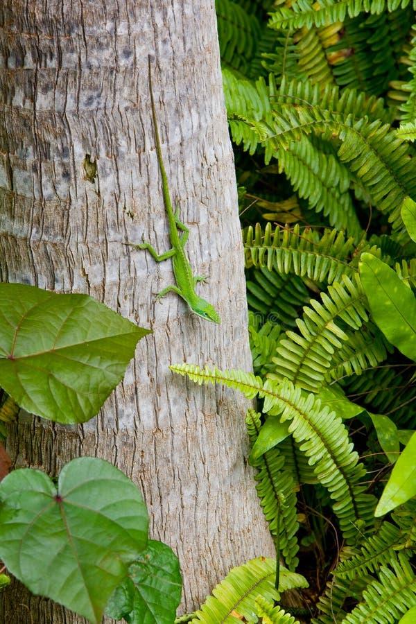 Gecko en árbol imágenes de archivo libres de regalías