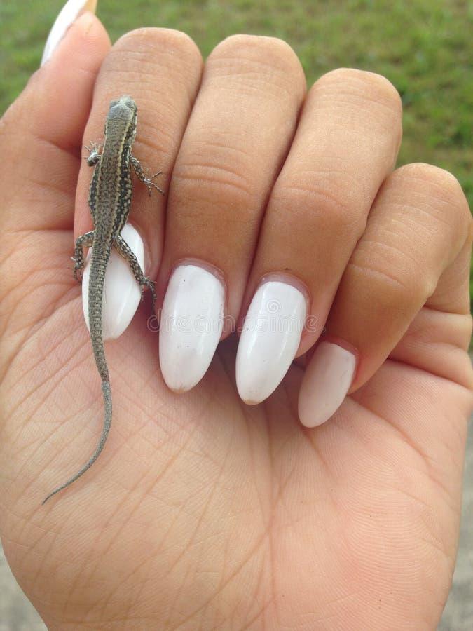 Gecko en main photos libres de droits