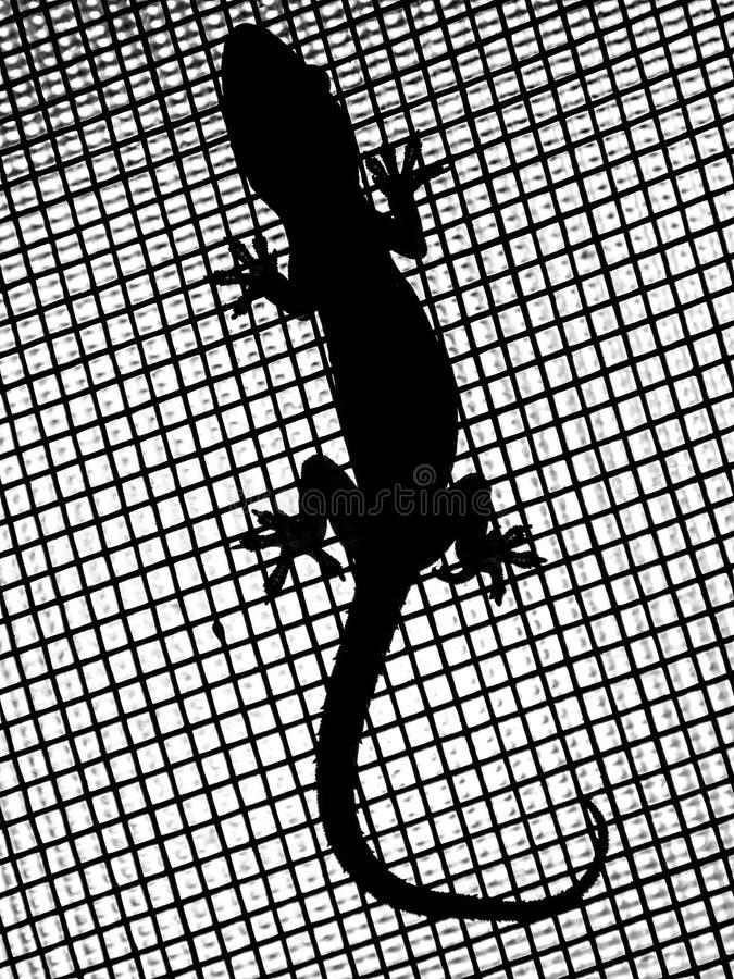 Gecko en silhouette photos stock
