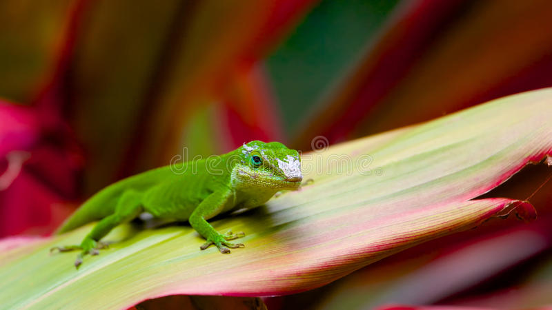 Gecko enjoying the summer heat in the garden royalty free stock image
