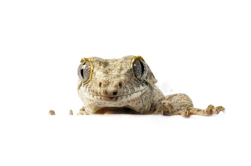 Gecko Gargoyle стоковое фото