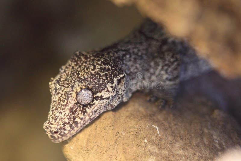 Gecko Gargoyle стоковая фотография rf