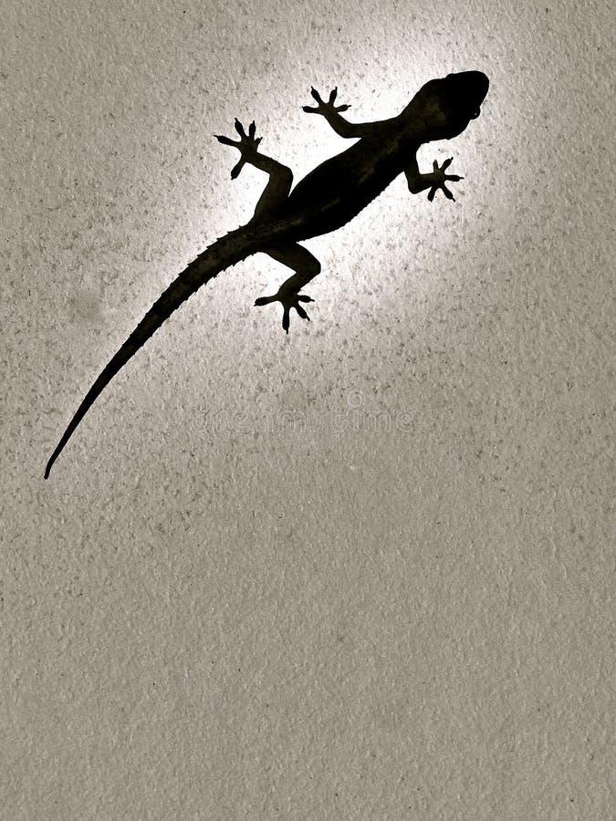 Gecko, Hemidactylus Frenatus, silhouette noire sur un mur blanc lumineux image stock