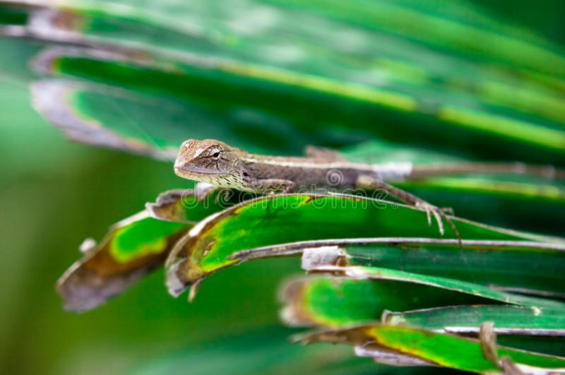 Download Gecko hunting stock photo. Image of grass, summer, amphibia - 8618298