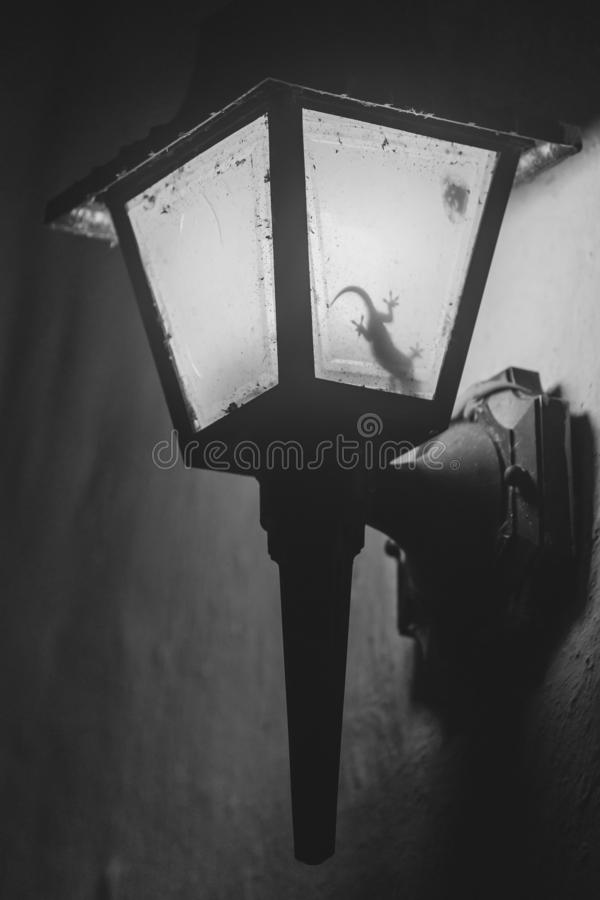 Gecko in  a lamp stock image