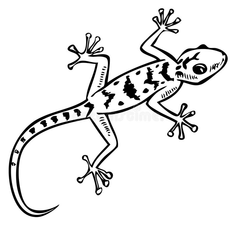 Gecko Clipart Black And White