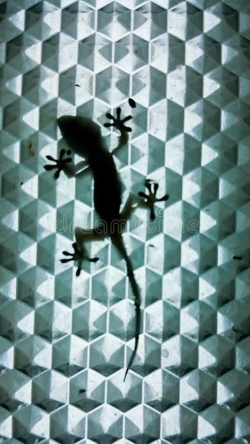 Gecko silhouette inside a lamp stock photography
