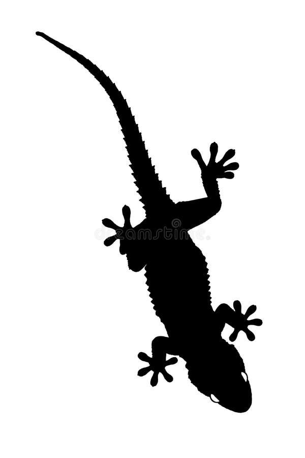 Gecko silhouette royalty free stock photos