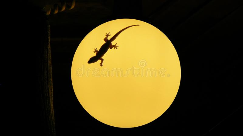 Gecko sur une lampe photo stock