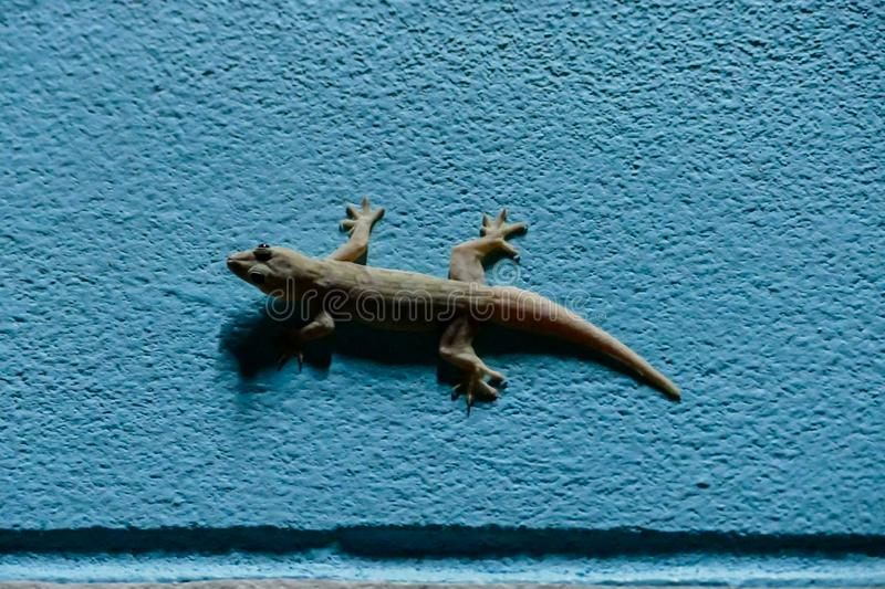 gecko on wall, digital photo picture as a background stock photo