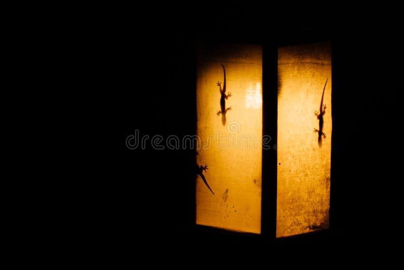 geckoes剪影在纸火炬的黄灯的在亚洲 壁虎是阴影 库存图片