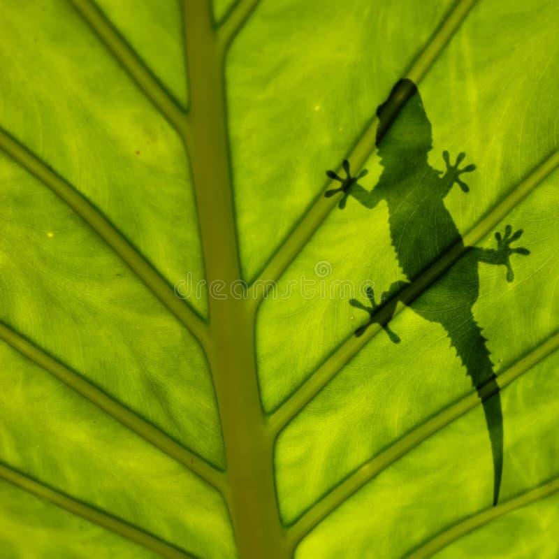 geckoleafsilhouette royaltyfri fotografi