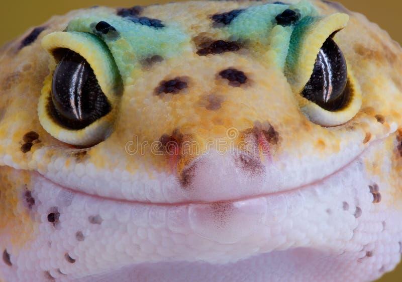 geckoleende royaltyfri foto