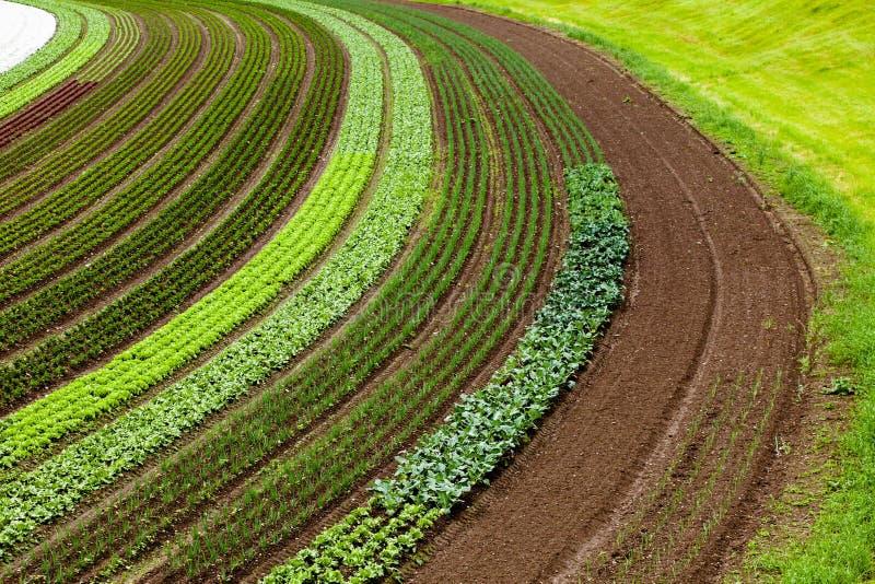 Gecultiveerd land met plantaardige flarden stock foto's