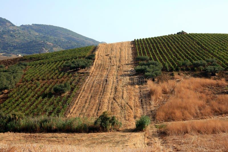 Gecultiveerd Siciliaans platteland royalty-vrije stock foto's