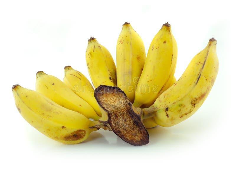 Gecultiveerde banaan royalty-vrije stock afbeeldingen