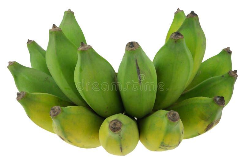 Gecultiveerde banaan op witte achtergrond royalty-vrije stock foto's