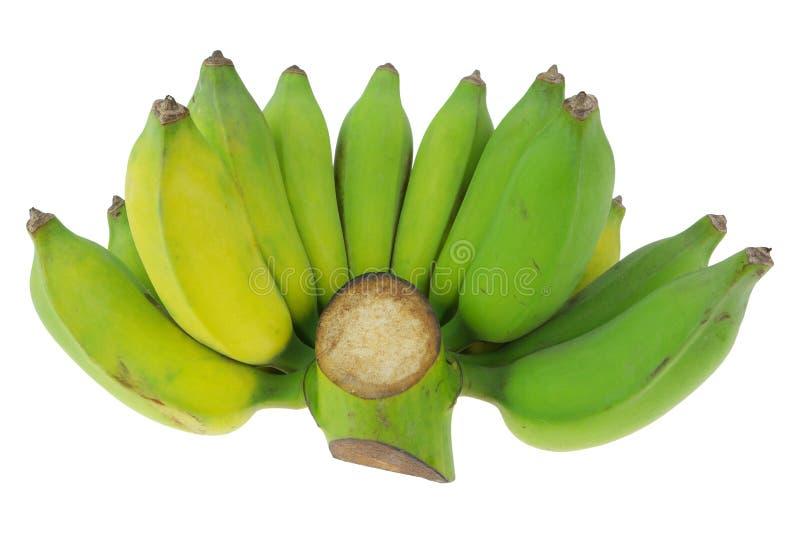 Gecultiveerde banaan op witte achtergrond stock foto