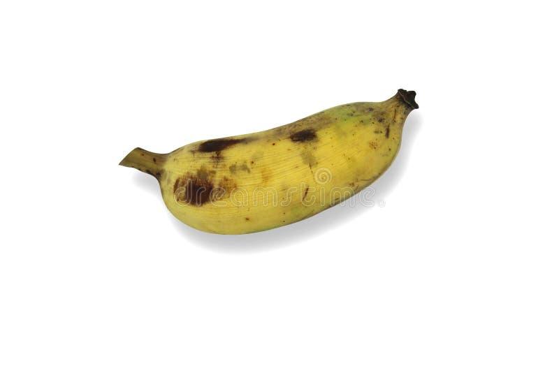 Gecultiveerde die banaan op witte achtergrond wordt geïsoleerd stock afbeeldingen