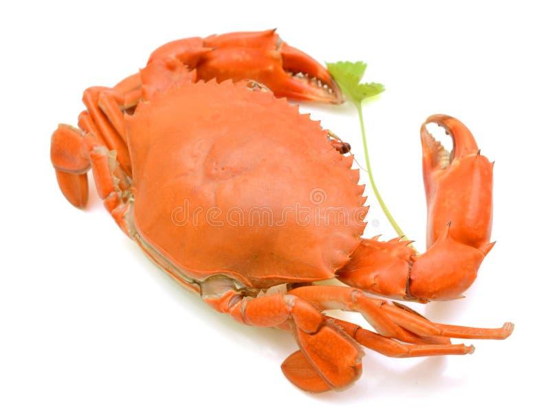 Gedämpfte Krabbe stockfotos