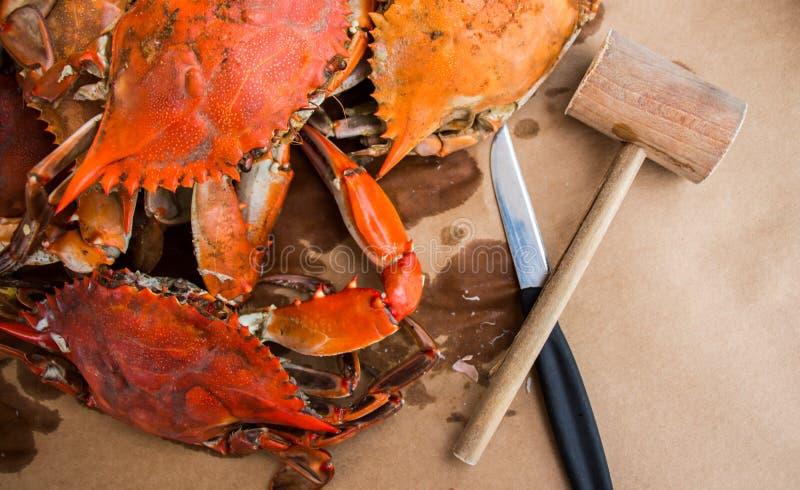 Gedämpfte Krabben mit Gewürzen Maryland-blaue Befestigungsklammern stockbild