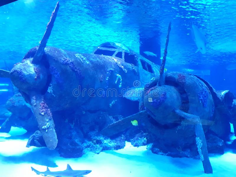 Gedaald vliegtuig onderwater stock foto's