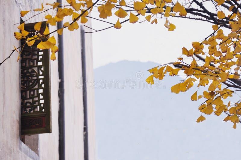 Gedanken des Herbstes außerhalb des Fensters lizenzfreies stockfoto